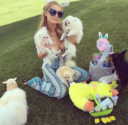 Пэрис Хилтон очень любит своих собак