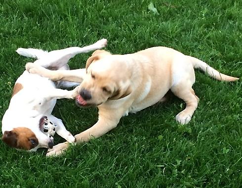 В звездном семействе уже живут две собаки