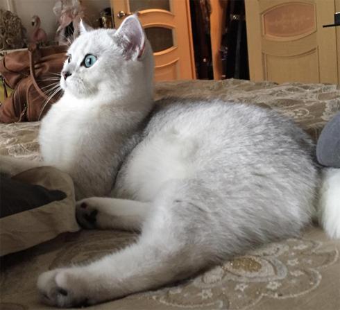 Анастасия Макеева ищет жениха для своей кошки
