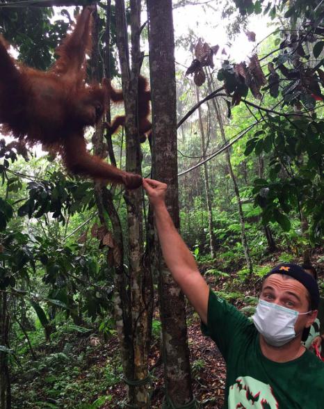 Леонардо Ди Каприо побывал в реабилитационном центре для спасенных орангутангов Суматры