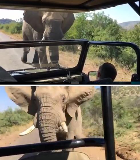 На Арнольда Шварценеггера напал слон
