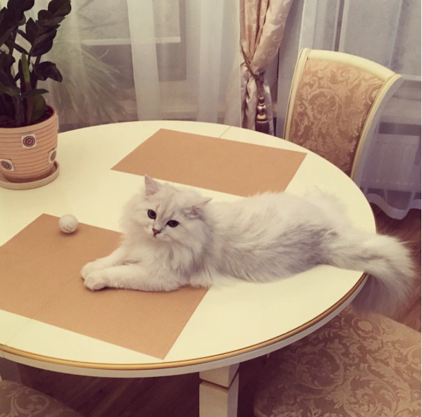 Белый красавец был настоящей звездой микроблога Волочковой