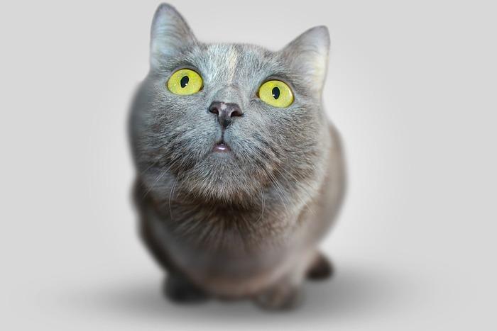 """коты обычно возвращаются на """"место преступления"""""""