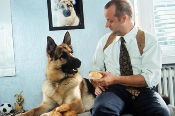 Самый лучший друг: собаки, ставшие звездами кино