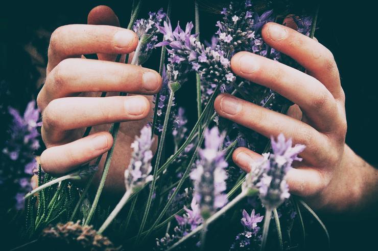 приятный аромат лаванды поможет вам расслабиться