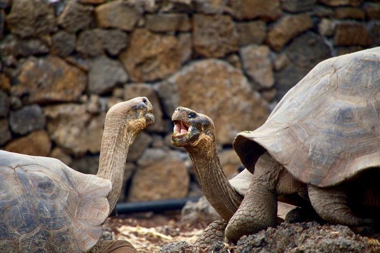 Удивительные галапагосские черепахи живут в Пражском зоопарке