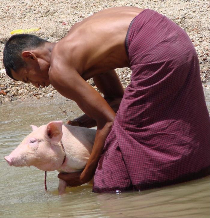 В Мьянме мужчины носят длинные юбки — пасо