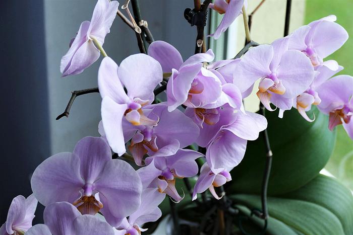 Комнатные растения: полезные иопасные для дома